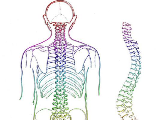 spine 257870 960 720